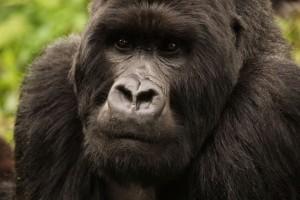Charles Babault Safaris